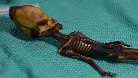 Атакамский гуманоид, найденный в 2003 году в пустыне в Перу © Bhattacharya S et al. 2018
