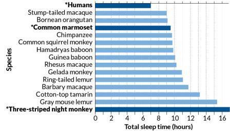 Средние потребности во сне для некоторых видов приматов. Темным цветом выделены виды, для которых теоретические предсказания продолжительности сна не совпадают с наблюдениями ©Nunn and Samson, 2018