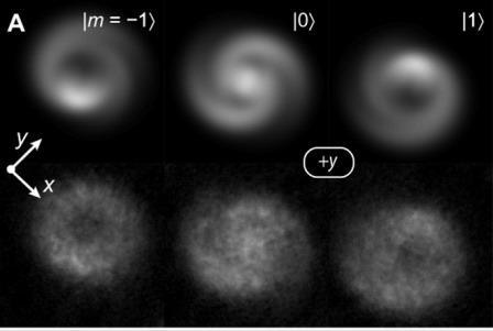 (A) Смоделированные (верхние) и экспериментальные (нижние) плотности столбцов частиц в разных спиновых состояниях © Wonjae Lee at al.