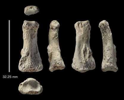 Найденная кость с шести различных ракурсов  ©Ian Cartwright