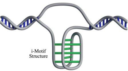 Структура i-мотива © Zeraati et al., Nat Chem, 2018