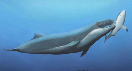 Llanocetus denticrenatus Реконструкция Carl Buell