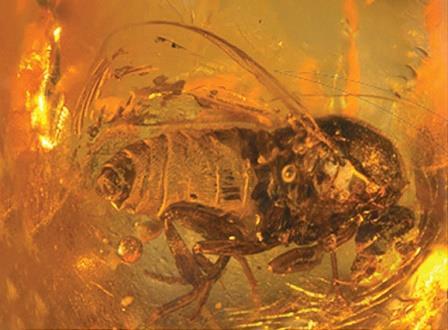 © Evgeny E. Perkovsky et als. / Cretaceous Research