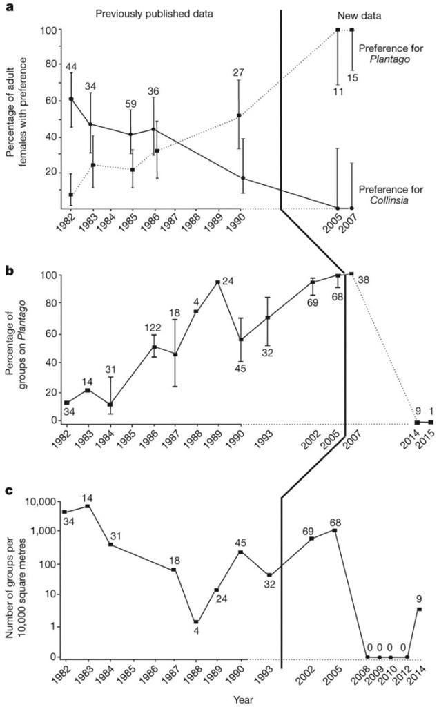 Рис. 2. Переход бабочек на новое кормовое растение и последующее вымирание популяции.