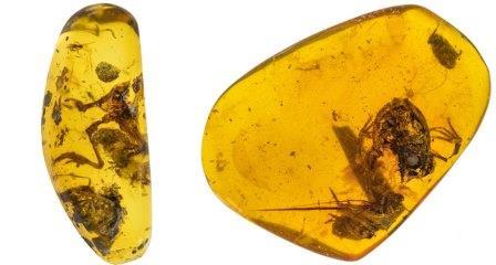 Один из образцов (слева) сохранил узнаваемые лягушачьи конечности, другой (справа) — почти целый череп  ©Lida Xing, Florida Natural History Museum