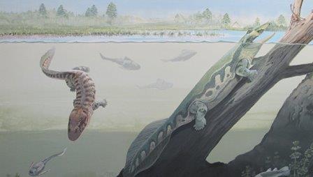 Так художник представил себе амфибий Umzantsia (слева) и Tutusius (справа), древнейших четвероногих Земли © Maggie Newman