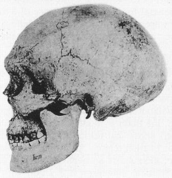 Череп H. sapiens № 101 из Верхней пещеры (Wu, Poirier, 1995, p. 161)