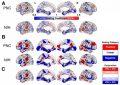 Рис. 1.Отделы коры, относительный размер которых растет (показаны красным цветом) или уменьшается (синие) по мере увеличения мозга
