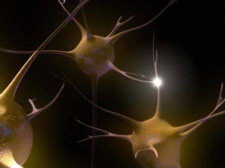 Передача сигнала между нейронами посредством синапса © Emily Evans/Wellcome Images