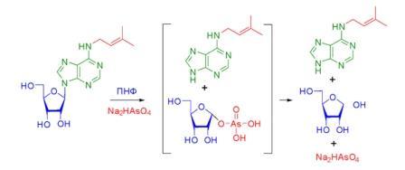 Схема 2. Необратимый ферментативный арсенолиз пуриновых нуклеозидов