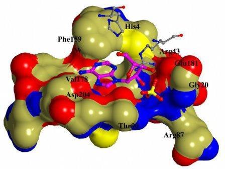 Структура активного центра пуриннуклеозидфосфорилазы  из Bacillus cereus в комплексе с аденозином (3UAW - PDB ID)