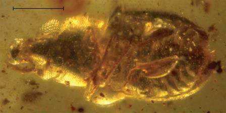 Burmomacer kirejtshuki ©Andrei A. Legalov/Historical Biology