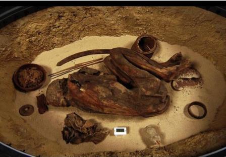 Останки RCGE 16550 в Египетском музее Турина