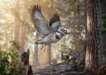 Реконструкция Jinguofortis perplexus, птицы эпохи динозавров,  которая жила в нынешнем Китае около 127 миллионов лет назад