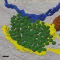 Электронная томография лизосомоподобных пузырьков © Neuron