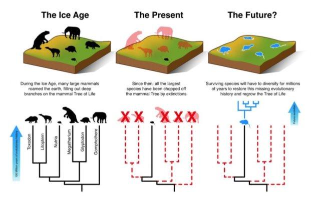 Еще во время последнего ледникового периода (слева) на Земле существовало большое разнообразие крупных млекопитающих, почти все из которых к нашему времени (в центре) уже исчезли. Выжившим требуются миллионы лет для того, чтобы адаптироваться, измениться и занять освободившиеся ниши (справа), — это время, которого у них уже, видимо, не осталось. ©Matt Davis, Aarhus University