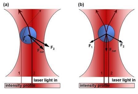 Силы, действующие на сферическую частицу в лазерном луче