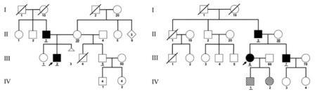 Рис. 3.Генеалогические деревья пациентов В (слева) и С (справа), эти пациенты указаныстрелками. Обозначения те же, что и на рис. 2.Цифры внутри фигуры— количество братьев или сестер.Треугольник— выкидыш. Изображение из обсуждаемой статьи вPNAS