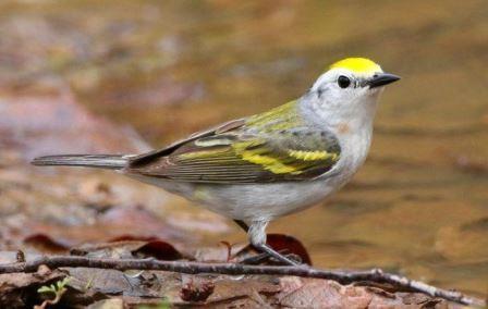 Орнитологи обнаружили в дикой природе птицу — гибрид трех видов