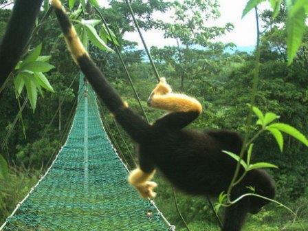 ©Panthera Costa Rica