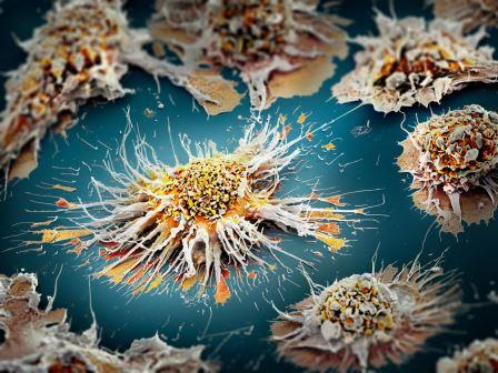 Дендритная клетка © Martin Oeggerli