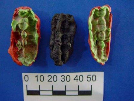 Древние обитатели Скандинавии жевали деготь и оставили в нем свою ДНК