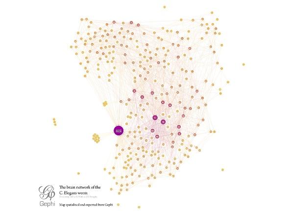Схема физических связей (коннектома) между нервными клетками нематоды © Mentatseb / Wikimedia