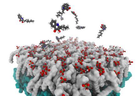 Небольшие молекулы связи, взаимодействующие с мембраной бактериальной клетки© Binghamton University