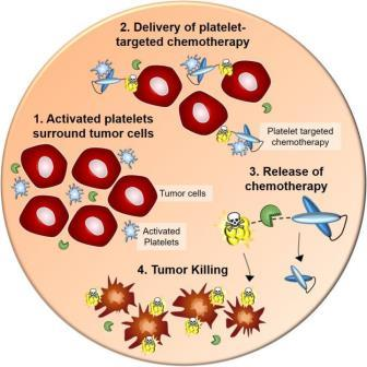 Команда профессора Питера в настоящее время разработала новый химиотерапевтический  агент для визуализации и нацеливания на тромбоциты для раннего выявления и лечения рака ©eurekalert.org