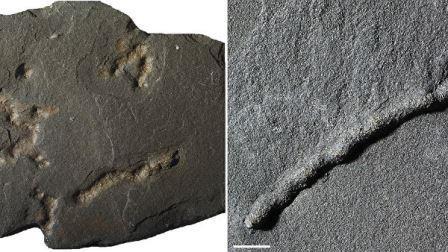 Окаменелые остатки и следы первых многоклеточных существ, найденных в Габоне © A. El Albani / IC2MP / CNRS - Université de Poitiers