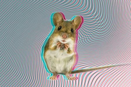 Производное амфетамина переключило мозг мышей с обычного зрения на «внутреннее»