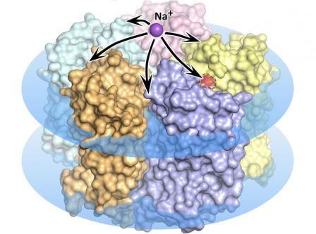 Белок-родпсин KR2, внедренный в клеточную мембрану (изображена на рисунке в виде голубых дисков), пропускает либо блокирует ионы натрия в зависимости от воздействия света ©Kirill Kovalev et al. / Science Advances