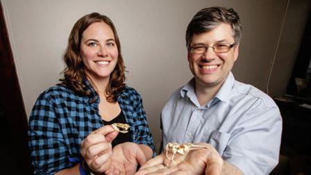 Стефания Крофтс и ее коллега Филип Андерсон держат в руках черепа гадюковых змей© L. Brian Stauffer / Field Museum of Natural History