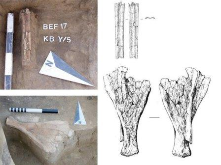 Орудия из кости лося из неолитического комплекса памятника Тартас-1© ИАЭТ СО РАН