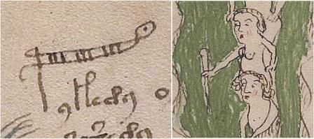 Слово palina и иллюстрация рядом с ним