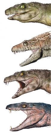 Реконструкция внешнего вида некоторых крокодиломорфов (сверху вниз): Notosuchus (вымер, хищник), Armadillosuchus (вымер, всеяден), Chimaerosuchus (вымер, травоядный), Pacasuchus (вымер, всеядный)Jorge Gonzalez