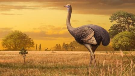 Внешний вид самой крупной нелетающей птицы Северного полушария в представлении художника© Andrey Atuchin