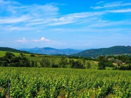 Виноградник © Pixabay