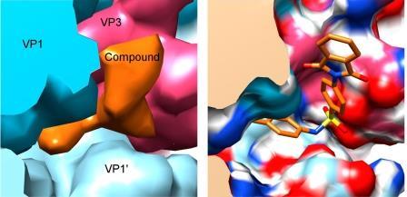Щель между белками капсиды вируса (VP1, VP3, VP1'), заполненная молекулой «вещества 17»© Abdelnabi R. et al. / PLOS Biology / CC BY 4.0
