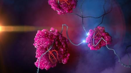 Cas13 (розовый), ведомый гидом (красный), редактирует РНК в клетке (синяя) © Stephen Dixon