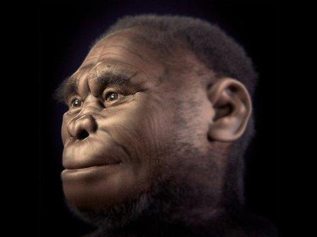 Реконструкция головы Homo floresiensis ©Cicero Moraes et al./ATOR