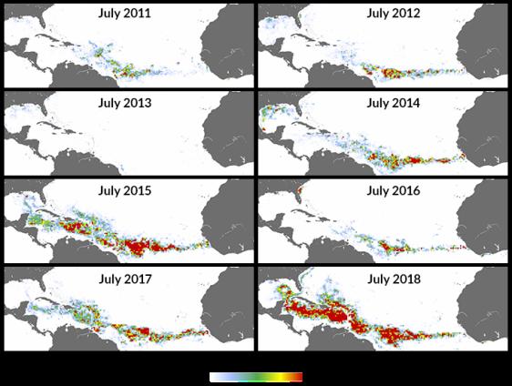 Плотность покрова бурых водорослей Sargassum в июле, 2011-2018 гг. © Wang et al., 2019