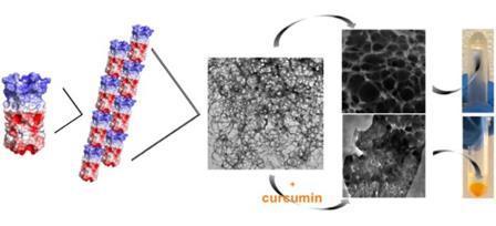 Иллюстрация того, как сконструированный протеин Q самоорганизуется, образуя гидрогели на основе волокон при низкой температуре. Эти гидрогели имеют пористую микроструктуру, что позволяет использовать их для доставки лекарств. © NYU Tandon