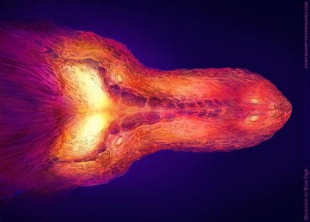 Результаты компьютерного моделирования распределения тепла в голове тираннозавра © Миссурийский университет