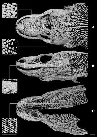 ЗащитаVaranus komodoensis ©sciencealert