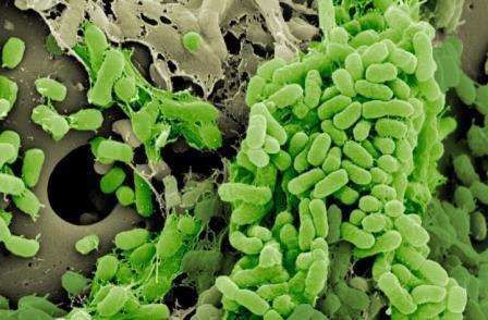 Бактерии, образующие биопленку на пластиковом шарике © Vaughn Cooper, Ph.D.