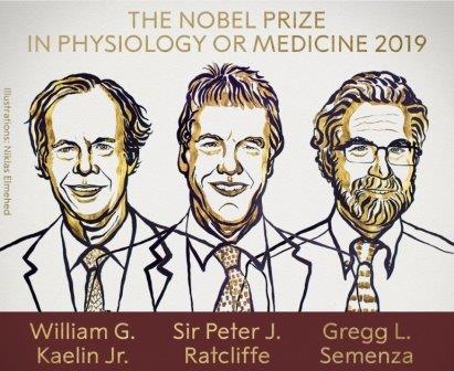 Уильям Келин, Питер Рэтклифф и Грегг Семенза © Nobel Prize
