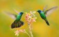 © Shutterstock/FOTODOM