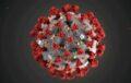 Изображение вируса 2019-nCoV © MAM/CDC/Handout via REUTERS