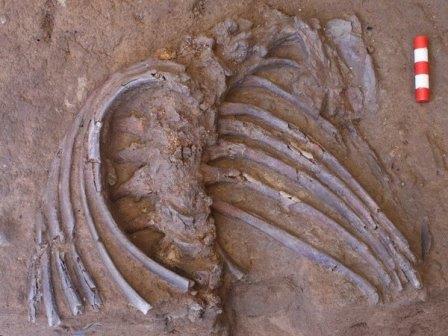 Останки, состоящие из раздробленного, но полного черепа, верхней части грудной клетки и обеих рук, были обнаружены в пещере Шанидар в 500 милях к северу от Багдада © Graeme Barker/University of Cambridge/PA